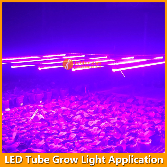 LED Integrated Tube Plant Light Application