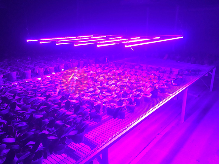26W LED Plant Tube Light in Colombia